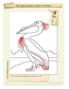 Drawing Instructions American White Pelican by John James Audubon Step 5