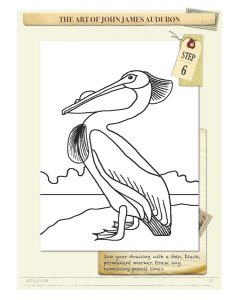 Drawing Instructions American White Pelican by John James Audubon Step 6